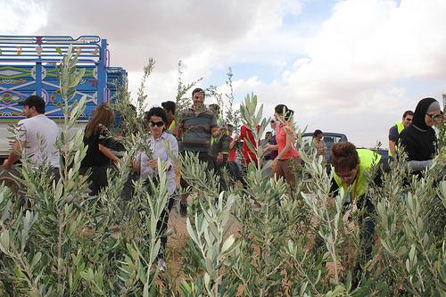 إقليم الصويرة.. إطلاق عملية لغرس أشجار الزيتون على مساحة 180 هكتار برسم الموسم الفلاحي 2011 – 2012