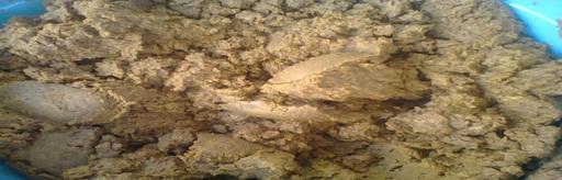 arbre-d'argane-5