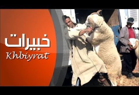 طرائف عيد الأضحى