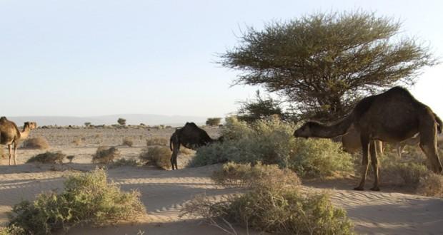 """الرباط: """"المغرب الصحراوي"""" توثيق بالنص والصورة للمظاهر الثقافية والتراثية للأقاليم الجنوبية"""