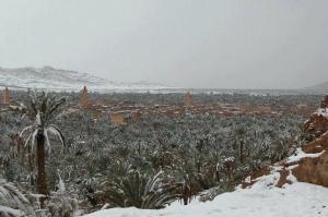 الثلج في زاكورة