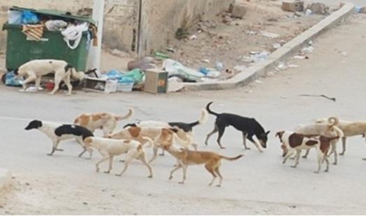 ورزازات: انتشار الكلاب يثير مخاوف السكان