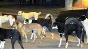 chiens-ouarzazate-2