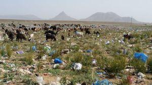 المطرح العشوائي للنفايات.... الكارثة البيئة الخطيرة-2