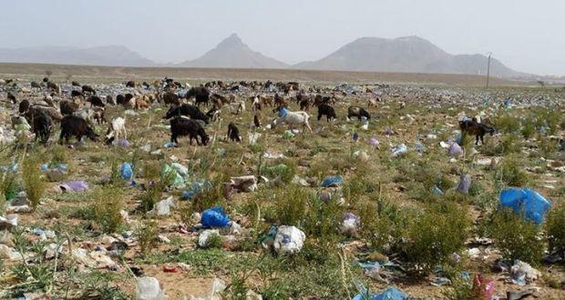 المطرح العشوائي للنفايات…. الكارثة البيئة الخطيرة-2