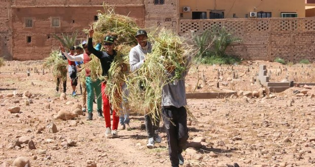 123متطوع يشاركون في تنظيف مقابر زاوية البركة- 4