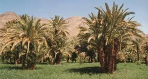 واحات درعة تجني ثمار التنزيل الموفق للرؤية الإستراتيجية لمخطط المغرب الأخضر