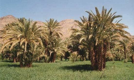 deserts-oasis-vallee-zagora-maroc-