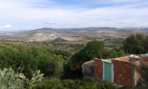 فلاحة أشجار التين المغربيّة المهددة بالخطر قد توفّر  الأمن الغذائي  للمغاربة الريفيين-3