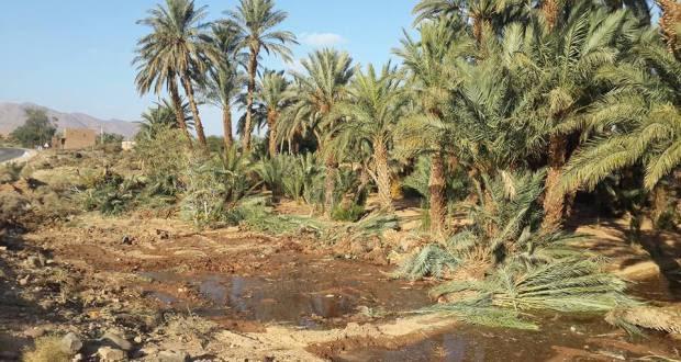 توسيع الطريق الوطنية رقم9 و اجتثاث أشجار النخيل و صمت جمعيات حماية البيئة