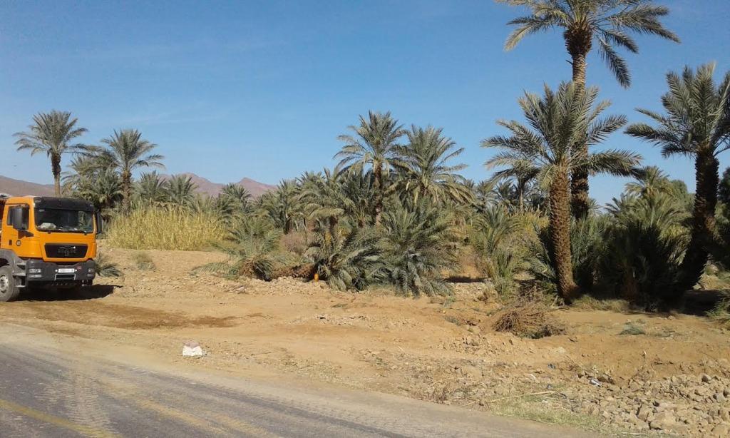 توسيع الطريق الوطنية رقم9 و اجتثاث أشجار النخيل و صمت جمعيات حماية البيئةe