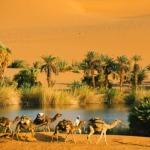 الواحات ثروة إنسانية في مواجهة تحديات التغيرات المناخية