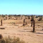 العطش والحرمان من مياه السقي يحولان المنطقة السقوية لأولاد إدريس وبونو والركابي  بواحة امحاميد الغزلان إلى كارثة بيئية