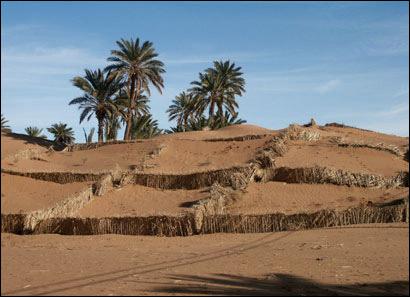 تخصيص 7.5 مليون درهم لتمويل مشاريع محاربة زحف الرمال بمنطقة محاميد الغزلان