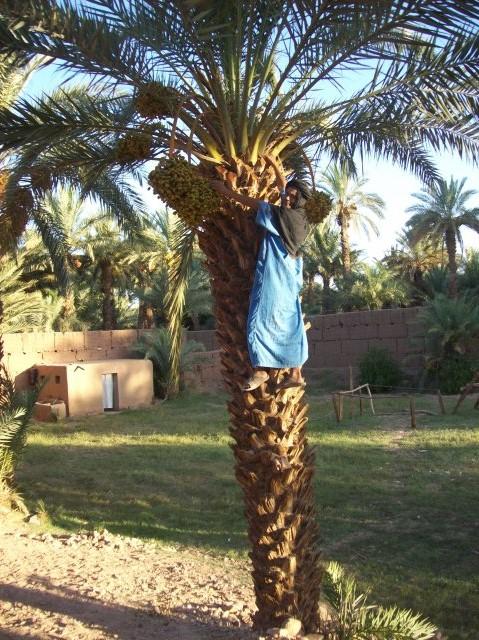 الشجرة المباركة و الإنسان الدرعي