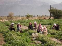 حقيقة معانات العاملات الزراعيات بضواحي اكادير