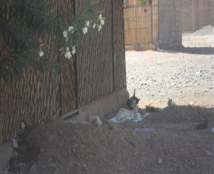 ساكنة ودادية النصر و الأحياء المجاورة بمدينة زاكورة يستغيثون من أخطار  الكلاب والقطط الضالة