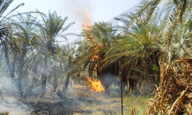 78 نخلة حصيلة حريق شب بأحد دواوير تنزولين