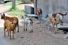 تنغير: ظاهرة انتشار الكلاب الضالة تتحول إلى مصدر قلق للساكنة