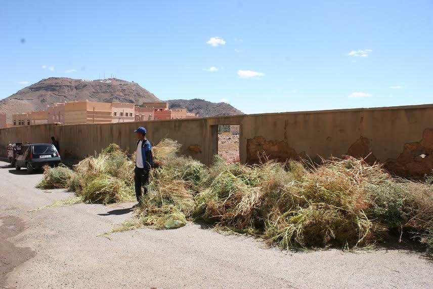 123 متطوع يشاركون في تنظيف مقابر زاوية البركة