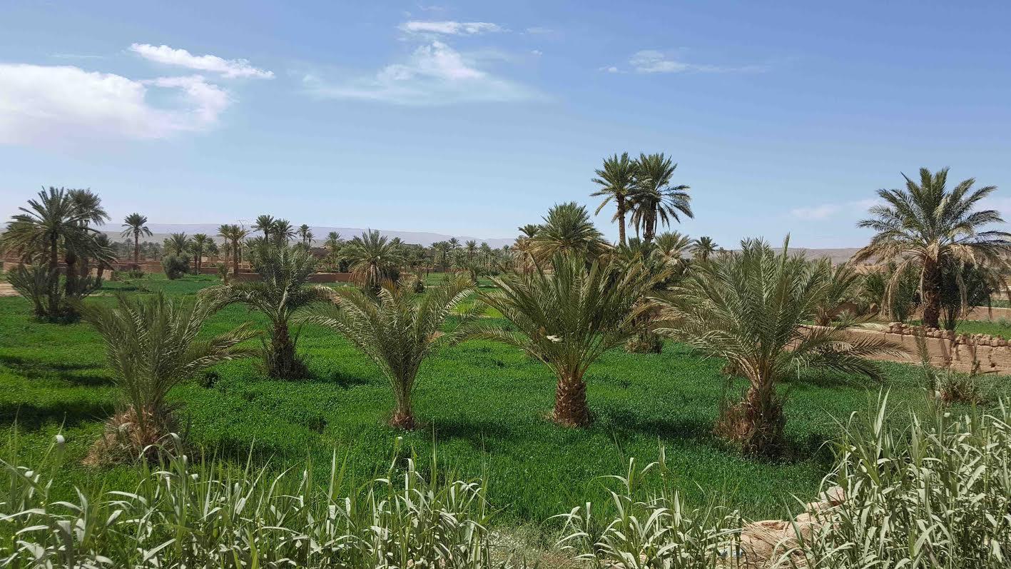 """صور """"زكونو"""" الأرض الخصبة التي تلون بيئة تازارين بالأخضر"""