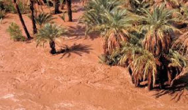 ورشة تحسيسية حول حماية البيئة وتثمين الموارد الطبيعية بواحات درعة بأكدز 31 مارس