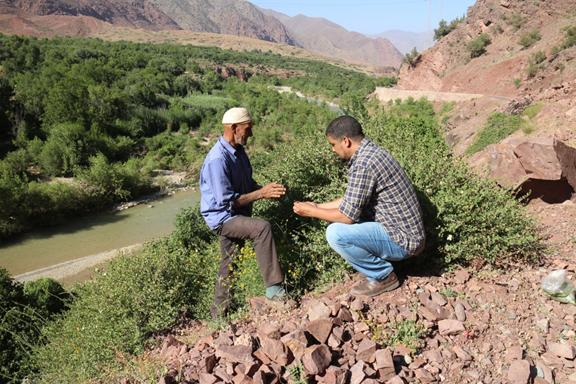 الحفاظ على التنوع التقليدي للمحاصيل والنباتات الطبية البرية في المغرب