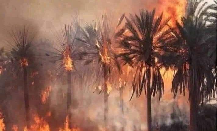 طائرات تابعة للقوات الجوية الملكية تتمكن من إخماد حريق واحة تالوين نواحي إكدز